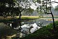 Acharya Jagadish Chandra Bose Indian Botanic Garden - Howrah 2011-01-08 9771.JPG