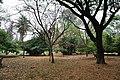 Acharya Jagadish Chandra Bose Indian Botanic Garden - Howrah 2011-02-20 1573.JPG