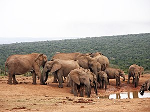 South African National Parks - Image: Addo Elephant National Park 001