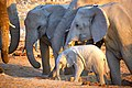 African Elephant Baby in Circle 2019-07-23.jpg