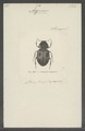 Agenius - Print - Iconographia Zoologica - Special Collections University of Amsterdam - UBAINV0274 022 08 0013.tif
