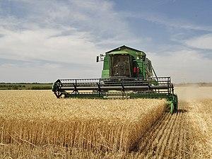 Harvest - Harvesting agriculture in Volgograd Oblast, Russia
