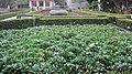 Alcazar Garden, Balboa Park, SD 4.JPG