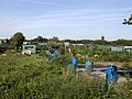Allotment Gardens - geograph.org.uk - 56272.jpg