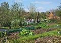 Allotments, St. Cross, Winchester - geograph.org.uk - 1776825.jpg