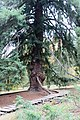 Americká zahrada - Chudenice - Okres Klatovy. (006).jpg