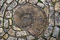 Ammonite - geograph.org.uk - 167895.jpg