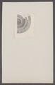 Ammonites spec. - - Print - Iconographia Zoologica - Special Collections University of Amsterdam - UBAINV0274 091 01 0005.tif