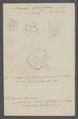 Amoeba bilimbosa - - Print - Iconographia Zoologica - Special Collections University of Amsterdam - UBAINV0274 113 09 0020.tif