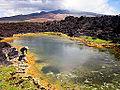Anchialine pond, South Maui.jpeg