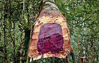 Aniba rosaeodora - Aniba rosaeodora wood