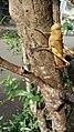 Animal in tree.jpg