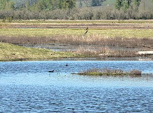 Willamette Valley (ecoregion) - Ankeny National Wildlife Refuge in the Prairie Terraces ecoregion