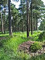 Ants nest Slufters inclosure New Forest Hampshire - geograph.org.uk - 207571.jpg