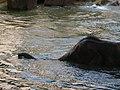 Antwerp Zoo (12210635905).jpg