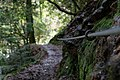 Around Geroldsau Waterfall 2020-03-13 15.jpg