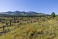 Around the Peaks Loop FR 418 (29830291262).jpg