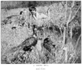 Arthur Wardle (1864-1949) - A Spring Idyll (1898).png