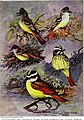 Articles about birds from National geographic magazine ((19-?)-(193-?)) (20800146755).jpg