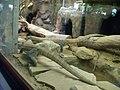 Artis, Zoo, Dierentuin - panoramio (39).jpg