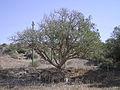 Ashkelon national park AS7.JPG