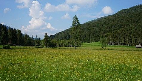 Auenmoos, Hochmoor, Metnitztal, Kärnten.jpg