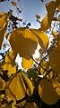 Autumn (124021437).jpeg