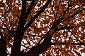 Autumn Colours at Chippewa Park, Thunder Bay (25109104765).jpg