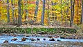 Autumn Foliage in Natirar, New Jersey File 3.jpg