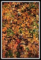 Autumn Leaves at night-02 (5660139935).jpg