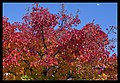 Autumn Leaves begin to fall-067 (5814143569).jpg