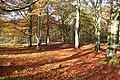 Autumn at the River North Esk walk, The Burn, Edzell - geograph.org.uk - 299806.jpg