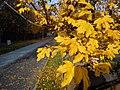 Autumn in Poznan.jpg