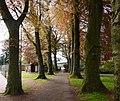 Avenue of beech trees, Upton Park, Torquay - geograph.org.uk - 1842773.jpg