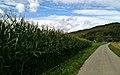 Bülach, Heimgarten - panoramio - gertrudis2010.jpg