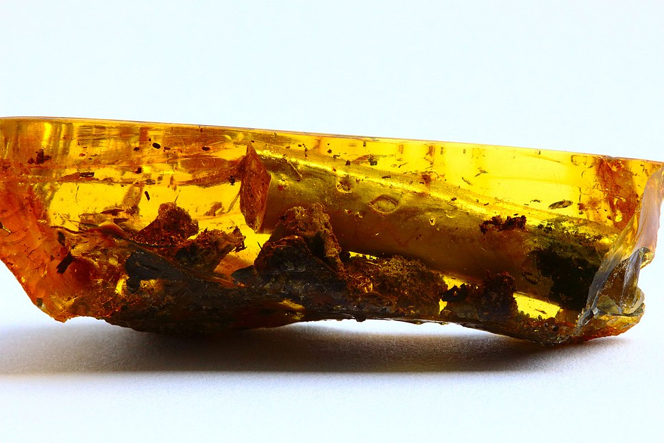 Baltic-amber-fossils-inclusions