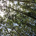 Bandipur tiger reserve trees.jpg