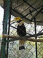 Bannerghatta National Park Safari (3202783923).jpg