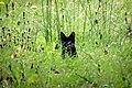 Batcat, Targu Jiu, Romania (49353323377).jpg