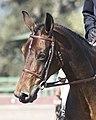 Bay Pony (3010919052).jpg