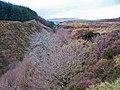 Bay River gorge - geograph.org.uk - 1061089.jpg