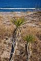 Beach Palms.jpg