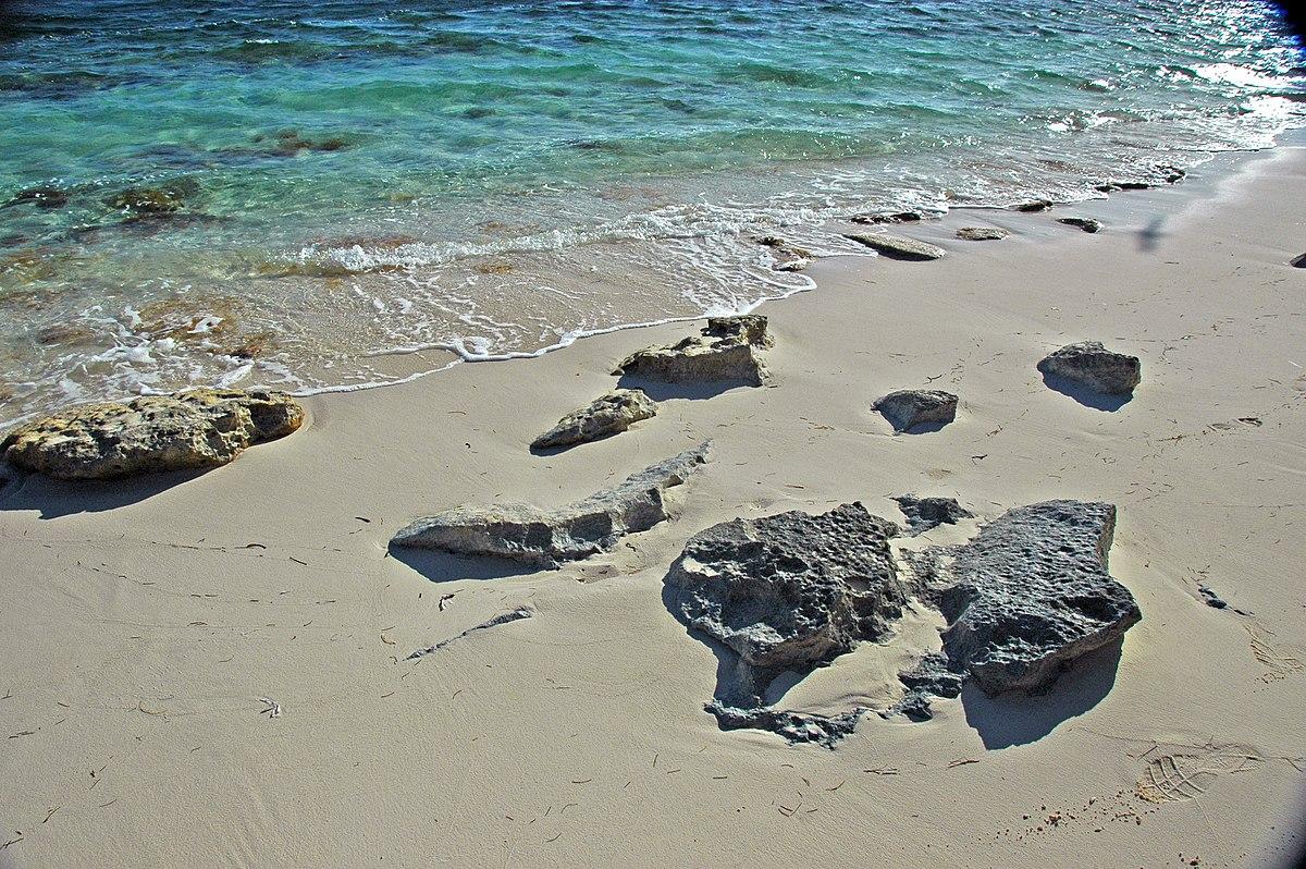 Beachrock in aragonite sand beach (San Salvador Island, Bahamas) (15807387450).jpg
