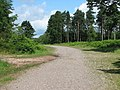 Beacon Hill - forestry road - geograph.org.uk - 480750.jpg