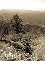 Bear Mountain, Sedona, Arizona - panoramio (70).jpg
