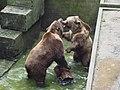Bear pit - panoramio.jpg