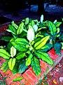Beautiful Plant at Baldha Garden.jpg