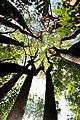 Beauty of Tree canopy.jpg