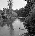 Begroeide oevers van de rivier de Jordaan bij de uitmonding van de rivier in het, Bestanddeelnr 255-4136.jpg