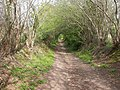 Bere Regis, bridleway - geograph.org.uk - 1268375.jpg